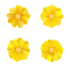 Set of isolated yellow gerbera or daisy vector