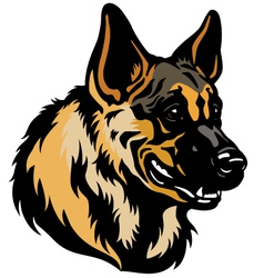 german shepherd head vector image vector image