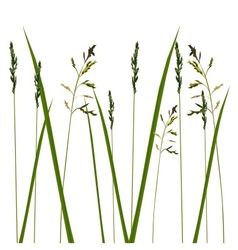 Allergy grass pollen isolated vector image