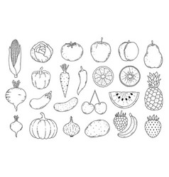 collection fruits and vegetables vector image