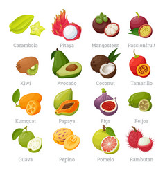 Exotic tropical fruits set with names vector