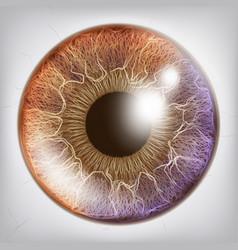 eye iris realistic anatomy concept vector image