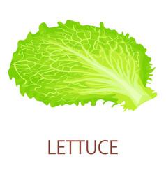Lettuce icon isometric style vector