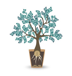 money tree isolated object on white vector image
