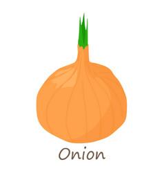 onion icon isometric style vector image