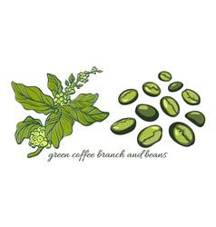 Set green coffee vector