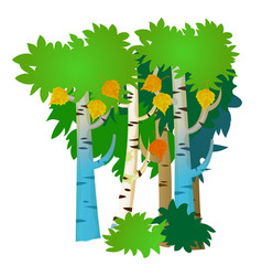 several birch trees with summer and autumn leaves vector image