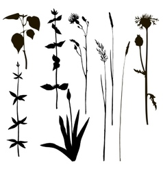 silhouettes of herbs and flowers vector image