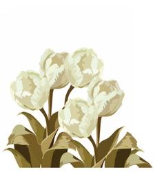Vintage Watercolor White Tulips bouquet vector image vector image