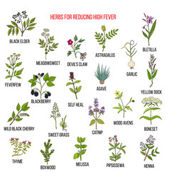 Best herbal remedies for reducing high fever vector