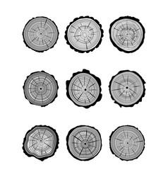 Cross section of trunks vector