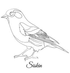 Eurasian siskin type bird coloring vector