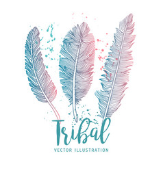 feathers set set on white background vector image