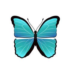 Morpho peleides butterfly vector
