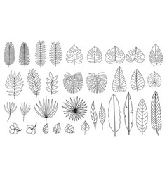 set of tropical leaves flowers black and white vector image