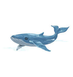 Whale is aquatic placental marine mammal vector