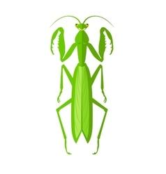 Green Grasshopper Icon vector image