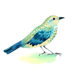 Watercolor of a bird on white vector image vector image