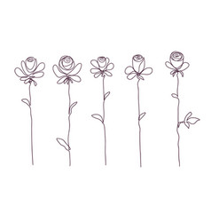 roses collection of isolated rose flower sketch vector image