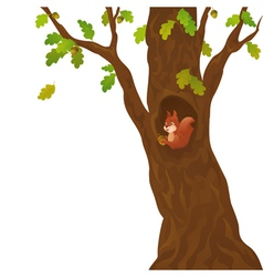 Cartoon oak and squirrel vector image