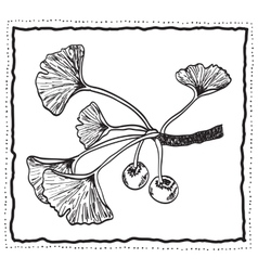 Ginkgo biloba hand-drawn branch with leaves vector