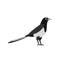 Magpie icon in flat style vector
