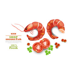 shrimps isolated on white realistic 3d vector image