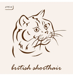 British Shorthair vector image