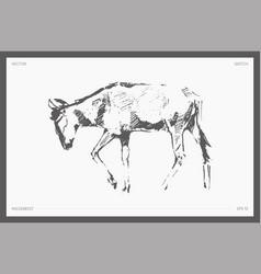 high detail hand drawn wildebeest sketch vector image