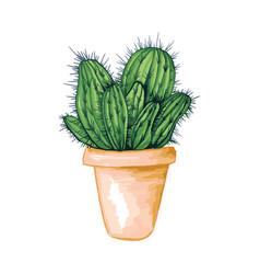 Mexican edible cactus or cacti for cinco de mayo vector