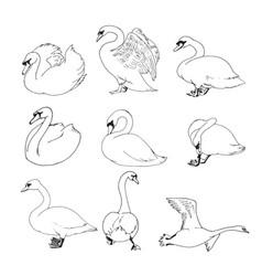 outline swans set vector image