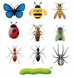 Simple insect designs vector