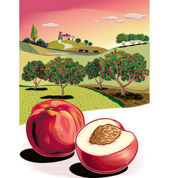 Two peaches and orchard vector