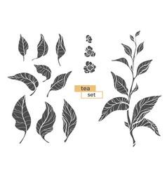 Tea branch silhouette 2 vector