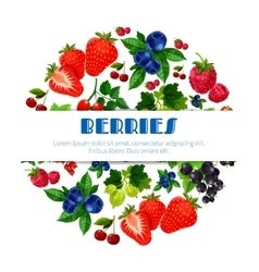 Fresh berries poster of berry bunch vector