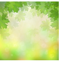 green maple leaves on blurry background vector image