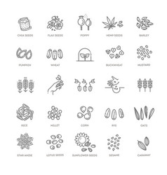 Plant seed icon set vector