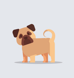 pug cute dog icon furry human friends home animals vector image