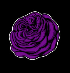 purple rose with black background vector image