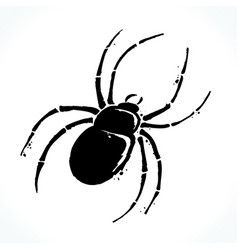 hand drawn spider isolated on white background vector image