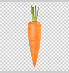 isolated realistic carrot icon design vector image