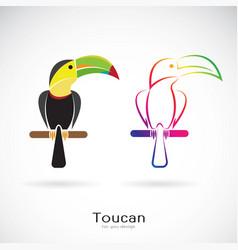 toucan bird design on white background wild vector image