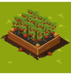 Vegetable Garden Box with Tomatoes Set 4 vector image vector image