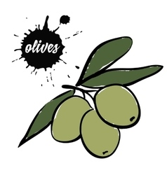 berries green olives vector image
