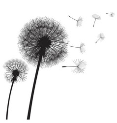 Dandelion time two dandelions blowing in the wind vector