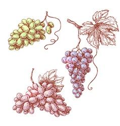 Grape set in color vector