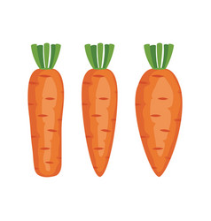 set of whole carrots vector image