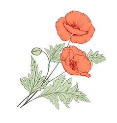 Bunch poppy flowers vector