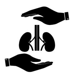 Kidneys in hand icon vector