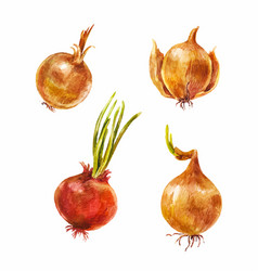 Set of watercolor onion vector